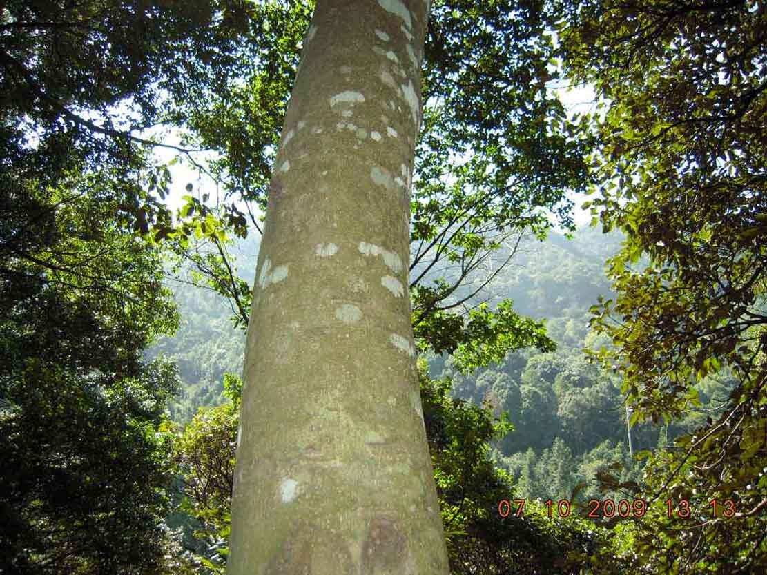 啥子风景树最漂亮