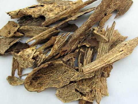 沉香和沉香木两者之间的界定_中国永发沉香树种植基地