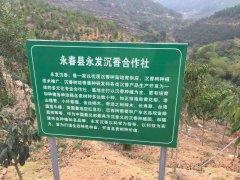 <font color='#0000FF'>福建省永发沉香合作社供应哪些树</font>