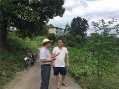 省农科院果树研究所叶新福所长到基地指导