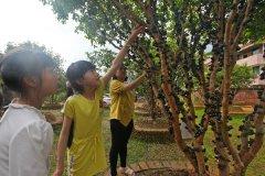 树葡萄:挂果后一株年收益超万元